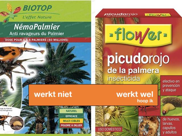 gif-tegen-rode-kever-zuid-frankrijk-palmboom
